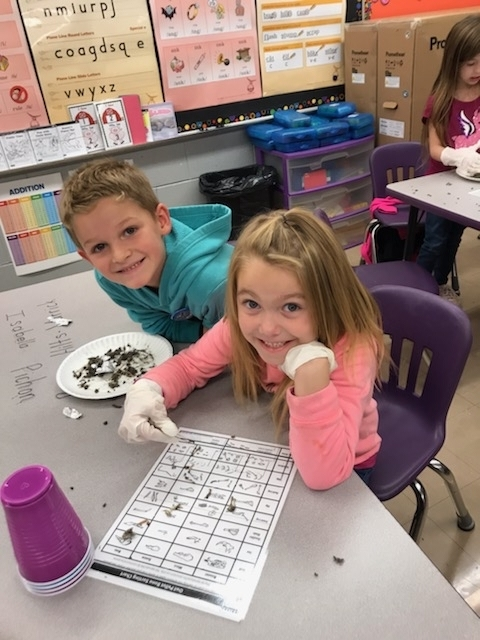 Determining the type of bone found in the owl pellet